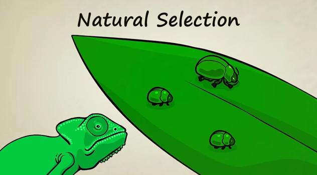 Capture chameleon