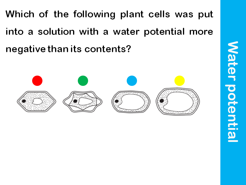 water-potential